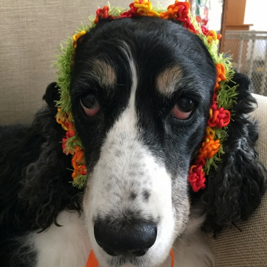 Annie's New Collar Turned Headdress from Kauai